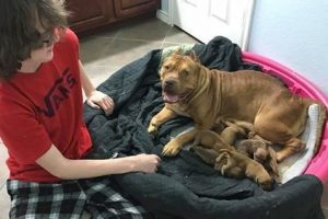 A cadela era muito tranquila e deixava que todos tocassem nos filhotes. (Foto: Reprodução / Carrie DeBord)