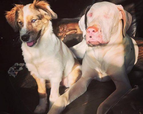 A deficiência uniu os cães, que se transformaram em melhores amigos. (Foto: Reprodução / Kathyrn Woodward)