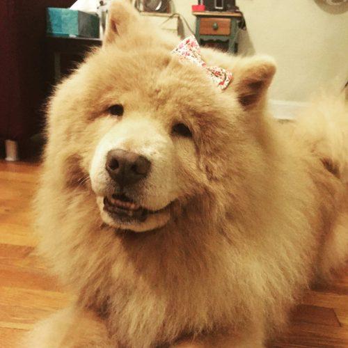 Desde o início o casal foi bastante paciente com a cadela e sempre lhe deu muito amor. (Foto: Reprodução / Bubbe The Chow)