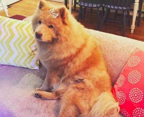 Bubbe costumava ser uma cadela bastante mal-humorada, além de idosa. (Foto: Reprodução / Bubbe The Chow)