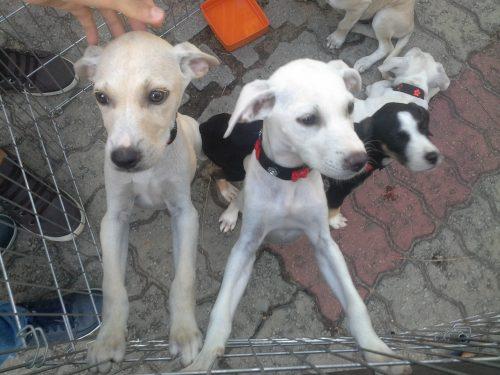 A ONG ABRACE levou seus animais que estavam disponíveis para adoção. (Foto: Portal do Dog)