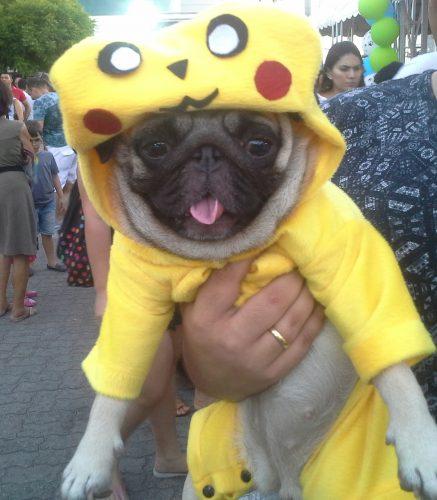 Tinha até Pug fantasiado de Pikachu. (Foto: Portal do Dog)