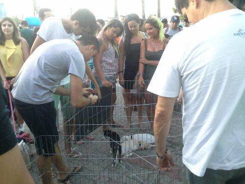 Muitas pessoas foram em busca denovos membros para a família e 23 animais foram adotados. (Foto: Portal do Dog)
