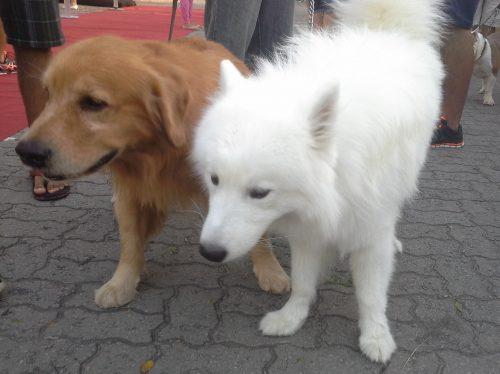 Vários animais foram ao evento com seus tutores. (Foto: Portal do Dog)