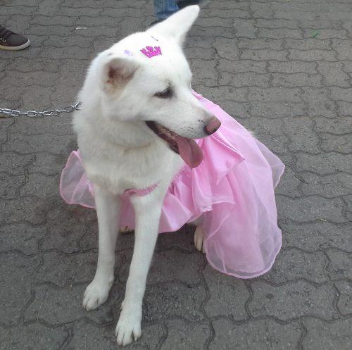 Alguns animais vestiram suas melhores roupinhas para participar do desfile. (Foto: Portal do Dog)