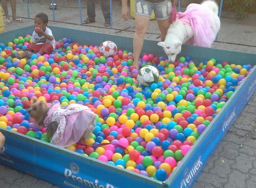 Os animais que foram ao evento também puderam brincar bastante na piscina de bolinha para cães. (Foto: Portal do Dog)