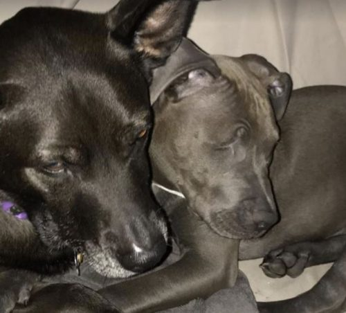 Em pouco tempo o cão foi adotado e ganhou uma família com direito a irmão mais velho. (Foto: Reprodução / Miracle Mack)