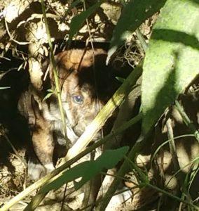 Os homens seguiram a cadela e descobriram sete filhotes na floresta. (Foto: Reprodução / Trevor Jennings)