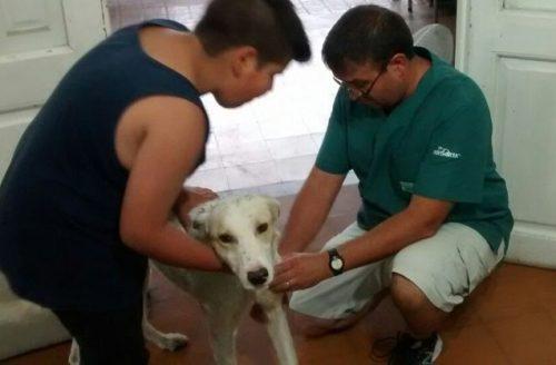 Mauco conseguiu comover várias pessoas e com isso recebeu doações para o tratamento do animal. (Foto: Reprodução / Courtesy photo)