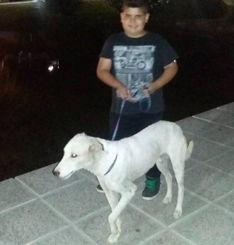 O cão segue se recuperando e, além do tratamento, ganhou uma nova e amorosa família. (Foto: Reprodução / Courtesy photo)