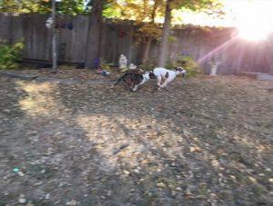Jersey, cão de Alex, acompanhou sua tutora e logo se deu muito bem com Hannah. (Foto: Reprodução / Texas Humane Heroes)