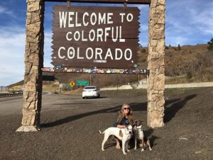 Na viagem de volta para Denver foi possível perceber o quanto eles já estavam se dando bem e como essa nova família seria muito unida. (Foto: Reprodução / Texas Humane Heroes)