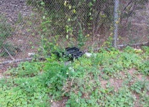 A cadelinha foi arremessada pela janela do carro dentro de uma sacola. (Foto: Reprodução / Facebook Charlotte's Place-A Journey of Hope)