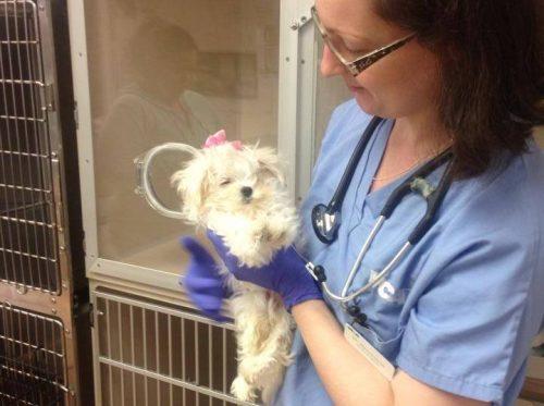 a cadelinha foi encontrada com ferimentos gravíssimos, mas recebeu todo o cuidado e tratamento que precisava. (Foto: Reprodução / Facebook Charlotte's Place-A Journey of Hope)