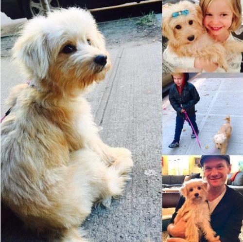 Gidget já está amando o novo lar e bastante entrosada com a nova família. (Foto: Reprodução / Instagram dbelicious)