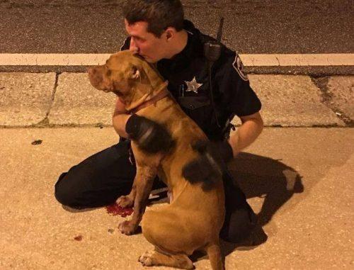 Os oficiais ficaram o tempo todo ao lados dos cães, até o serviço de animais local chegar. (Foto: Reprodução / Orange County Sheriff's Office)