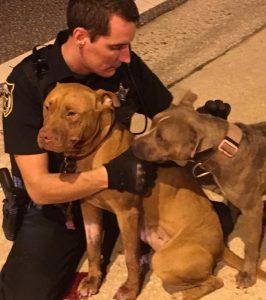 Os homens deram colo e carinho para os cães. (Foto: Reprodução / Patrick Hennessey)