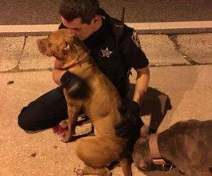 Os animais, que foram abandonados machucados e sozinhos, foram consolados por oficiais. (Foto: Reprodução / Orange County Sheriff's Office)