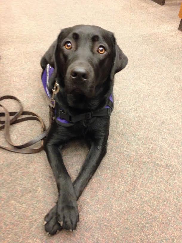 A cachorra Merel ajuda crianças que precisam depor no tribunal. (Foto: Reprodução / The Dodo)