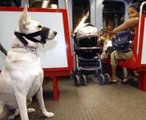 Animais de estimação poderão ser levados por seus tutores no metrô de Buenos Aires. (Foto: Reprodução / André Kosters / Lusa)
