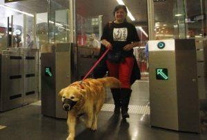 Os tutores deverão seguir algumas regras para transportarem seus animais de estimação no metrô. (Foto: Reprodução / Revista Brazil com z)