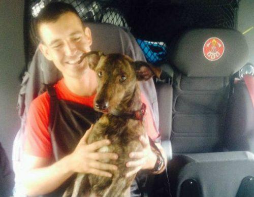 O 11º Grupamento de Bombeiros fez o resgate do animal. (Foto: Divulgação / 11º Grupamento de Bombeiros)