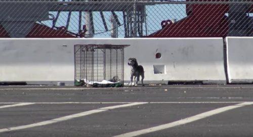 O controle de animais local já tinha tentado resgatar o cão, mas sem sucesso. (Foto: Reprodução / Hope for Paws)