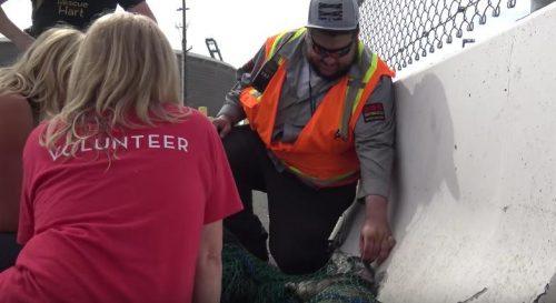 Um dos guardas de segurança do local, que alimentava o cão, ajudou a acalmar o animal. (Foto: Reprodução / Hope for Paws)