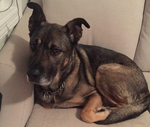 O cão vivia abandonado e sozinho em uma casa. (Foto: Reprodução / Lisa Heart)