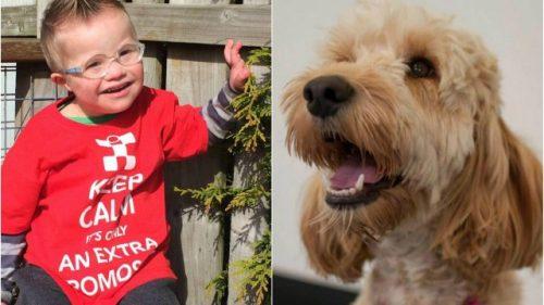 O cão viu o momento em que o menino ficou preso na máquina e foi chamar sua tutora. (Foto: Reprodução / Extra Online)