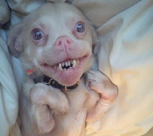 Apesar de tudo, Tucker é um animal muito feliz. Ele está sempre com um sorriso no rosto. (Fotos: Reprodução / Tucker Wears Goggles)