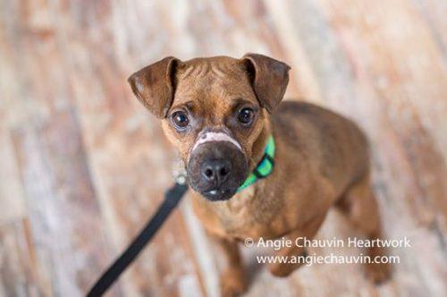 O cão recebeu tratamento e ficou bem, mas continuou com uma cicatriz branca em seu focinho. (Foto: Reprodução / Facebook Windsor/Essex County Humane Society)