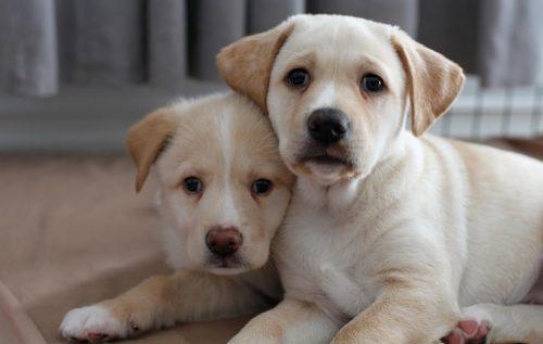 Já no Canadá, a cadela teve dois filhotes, Stella e Harley. (Foto: Reprodução / Dog Tales Rescue and Sanctuary)