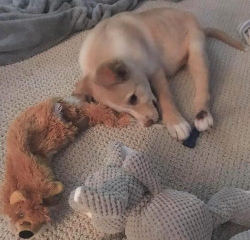 Por conta da deficiência, ninguém queria adotá-lo. Mas ele tinha muita paciência e seus brinquedinhos. (Foto: Reprodução / Dog Tales Rescue and Sanctuary)