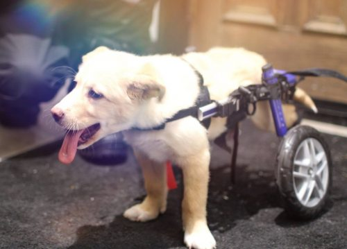 O cão nunca se deixou abater e foi recompensado. (Foto: Reprodução / Dog Tales Rescue and Sanctuary)