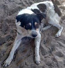 Oliveira foi resgatado e levado para o canil da ONG Abrace - Uma Causa Animal, mas logo fugiu novamente. (Foto: Reprodução / Abrace)