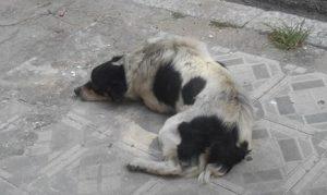 Porém, o cão fugiu e foi encontrado muito longe. (Foto: Reprodução / Abrace)