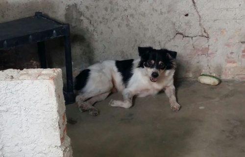 Mais uma vez o cão fugiu e novamente foi encontrado no Terminal da Parangaba, de onde foi resgatado e levado para o canil, que dessa vez tinha reforçado a segurança. (Foto: Reprodução / Abrace)