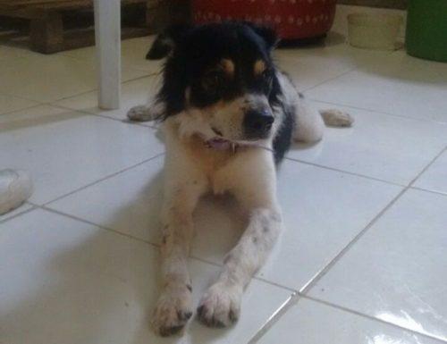 Apesar de ter sido encontrado em uma situação terrível, Oliveira estava bem de saúde e logo conseguiu ser adotado. (Foto: Reprodução / Abrace)