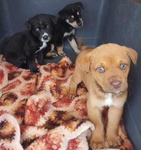 Agora, os cães estão em lar temporário, passam bem e seguem esperando por adoção. (Foto: Reprodução / East Dallas Pet Rescue)