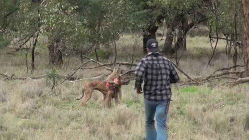 O homem viu o canguru agarrando o cão pelo pescoço e correu até onde os animais estavam. (Foto: Reprodução / YouTube ViralHog)
