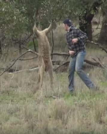 O homem então deu um soco no focinho do canguru, que fugiu do local. (Foto: Reprodução / Greg Bloom)