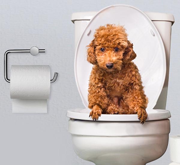3 Dicas Caseiras Para Ajudar Seu Cao Com Diarreia Portal Do Dog