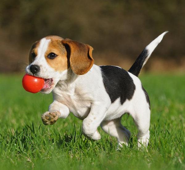 por que os cachorros pegam algo com a boca quando estão muito