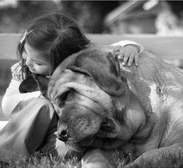 o que faz os cães serem animais tão amigáveis portal do dog