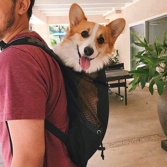 Bolsa Para Transportar Caes Pequenos : Cleo pires e outros aderem a moda de carregar o pet em