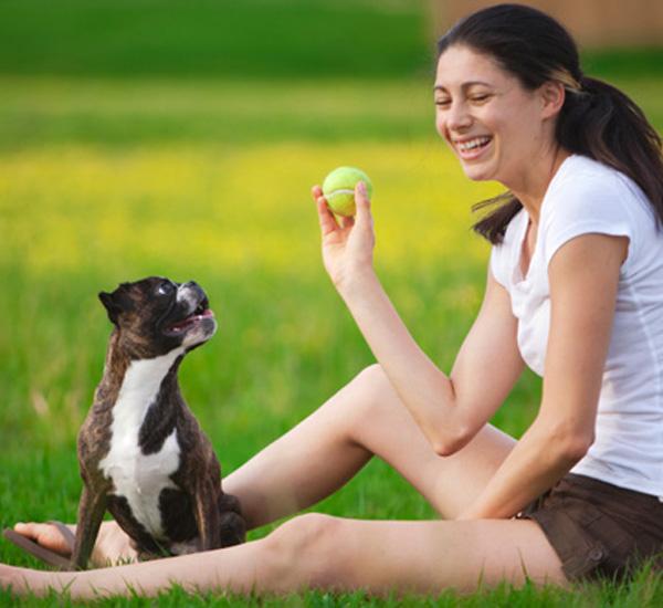 como os cães escolhem o seu humano preferido portal do dog