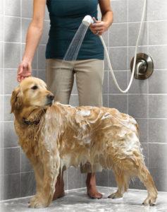 4 dicas para deixar o pelo do seu cão macio e fofinho após o banho