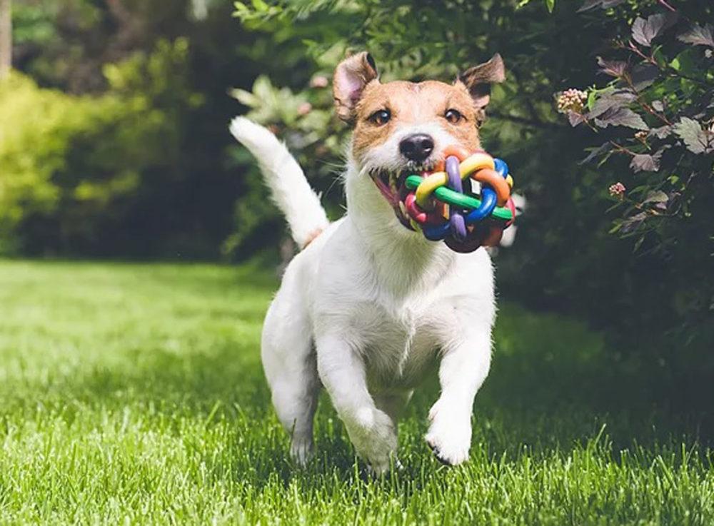 https://www.portaldodog.com.br/cachorros/wp-content/uploads/2018/04/por-que-brincar-e-tao-importante-para-os-cachorros-pdd2.jpg