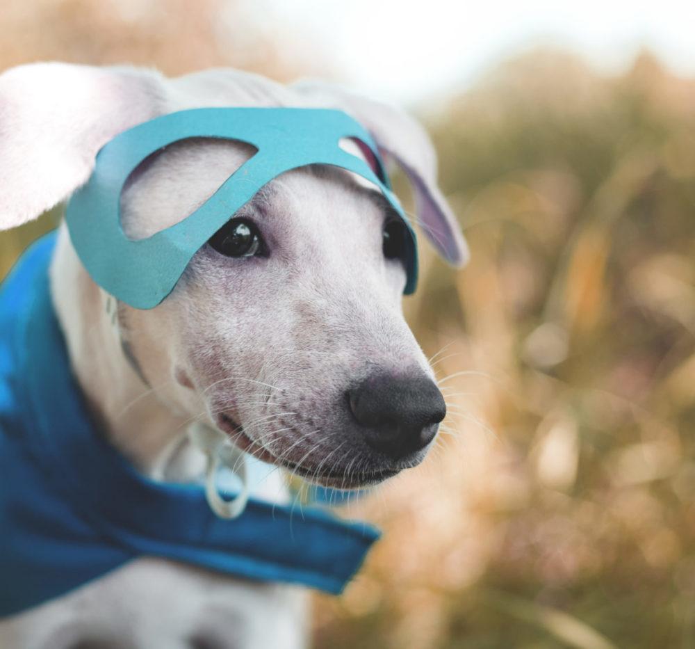 Cachorro SRD com máscara de papel e lençol azul de super-herói